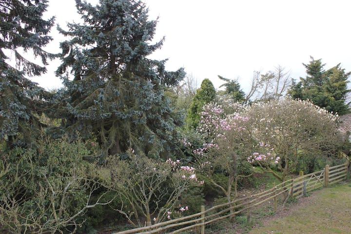 Magnolia Gardens - Kent