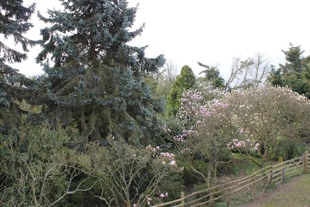 Magnolia Gardens - Kent - Σαλέ