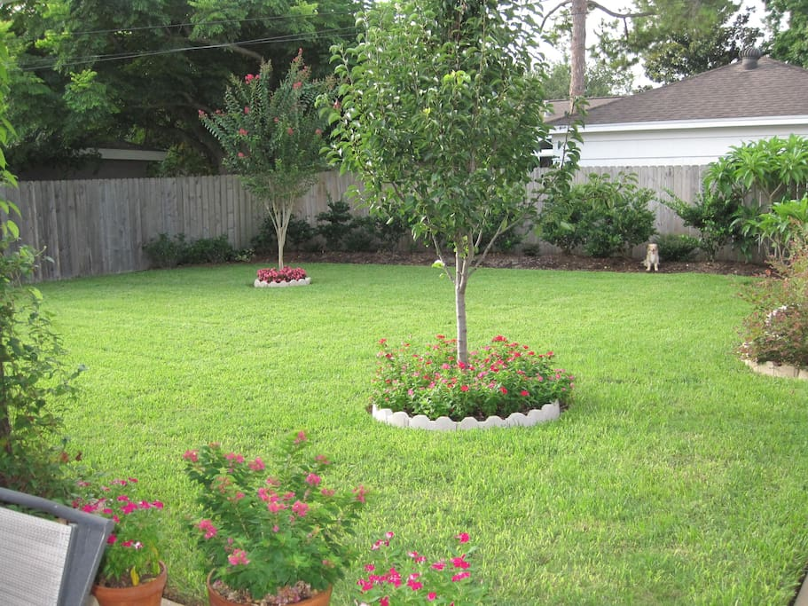 Clean, large backyard.  Great for kids to play.