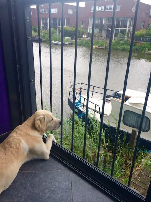 Our dog, Neve, likes to look over the canal and keeps an eye on the boat ;-).