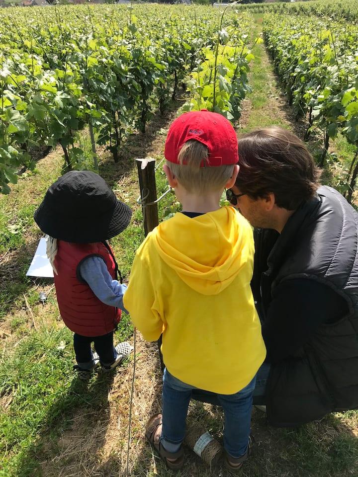 La conduite de la vigne pour tous !
