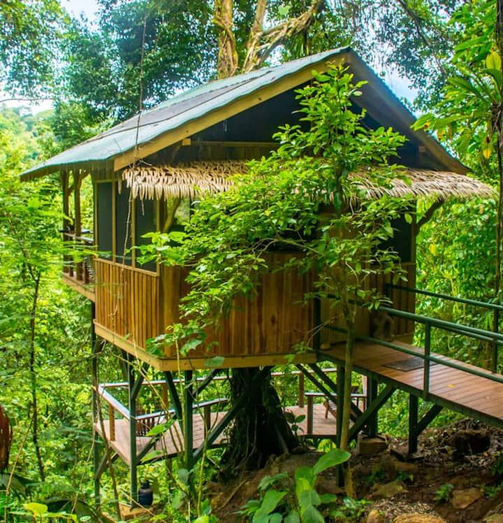 El Fenix Treehouse | Finca Bellavista