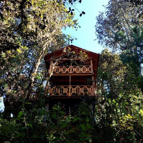 Cabaña en el Bosque de San José del Pacífico 3