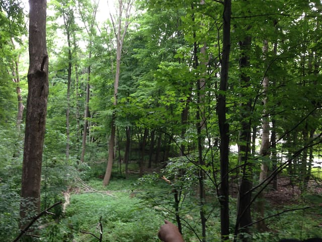 Lovely wooded area behind the house