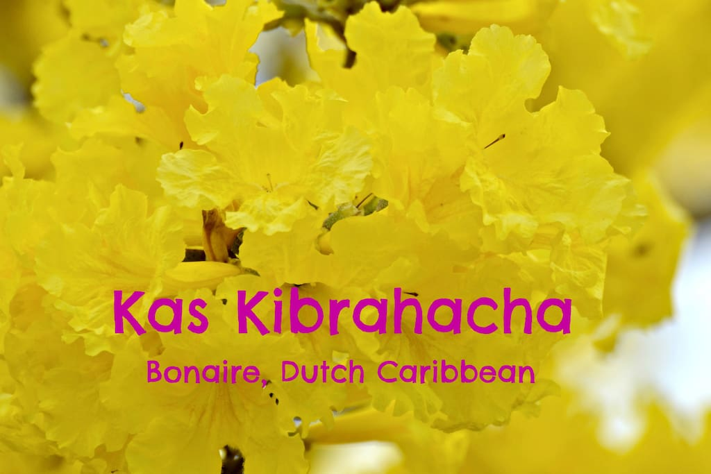 We welcome you to Kas Kibrahacha!