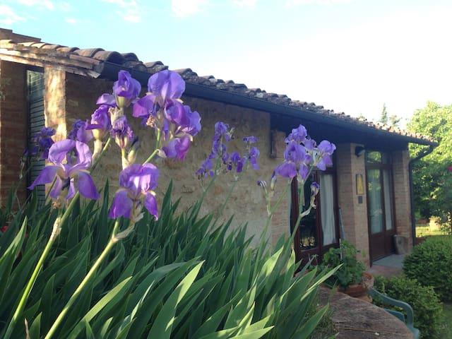 My Iris and atelier