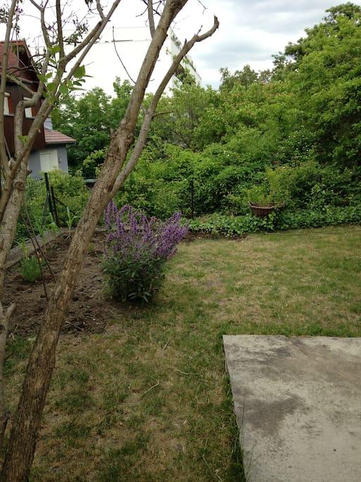 Duplex 80 m2 avec jardin proche centre ville maisons - Maison jardin hello kitty clermont ferrand ...