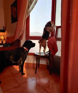 Sunshine Estate – Pet friendly