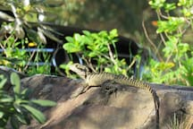 If you're really lucky, you might catch a glimpse of our friendly water dragon.