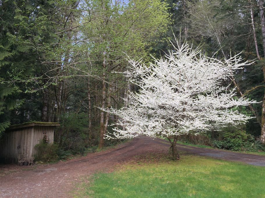 Spring in bloom - view from the front door