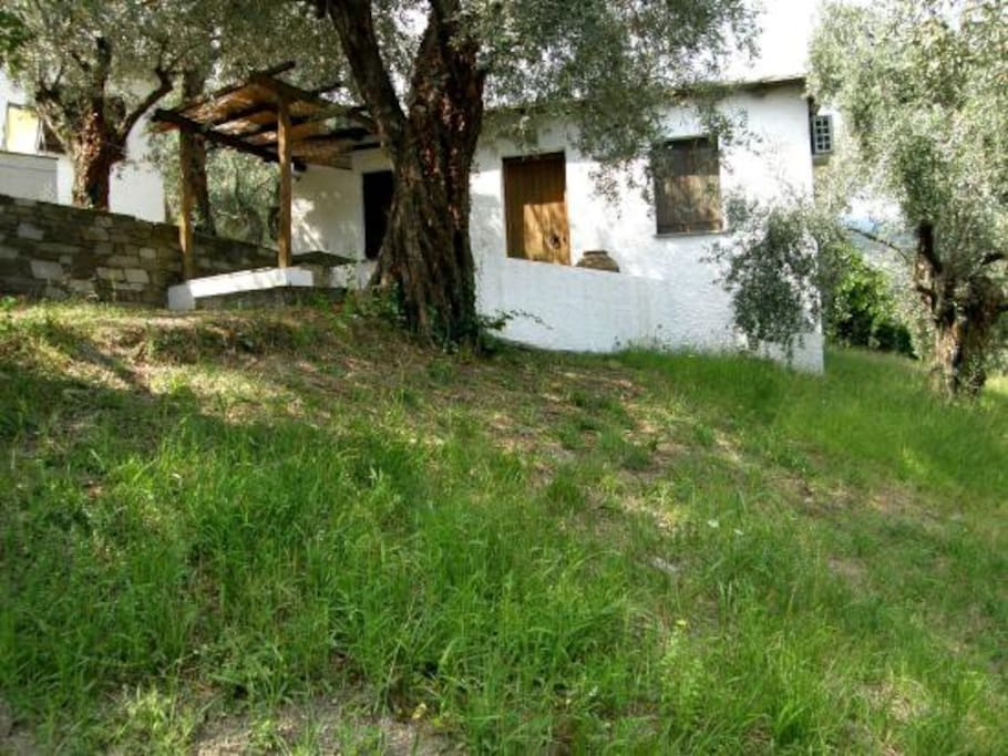 Small cottage among olives