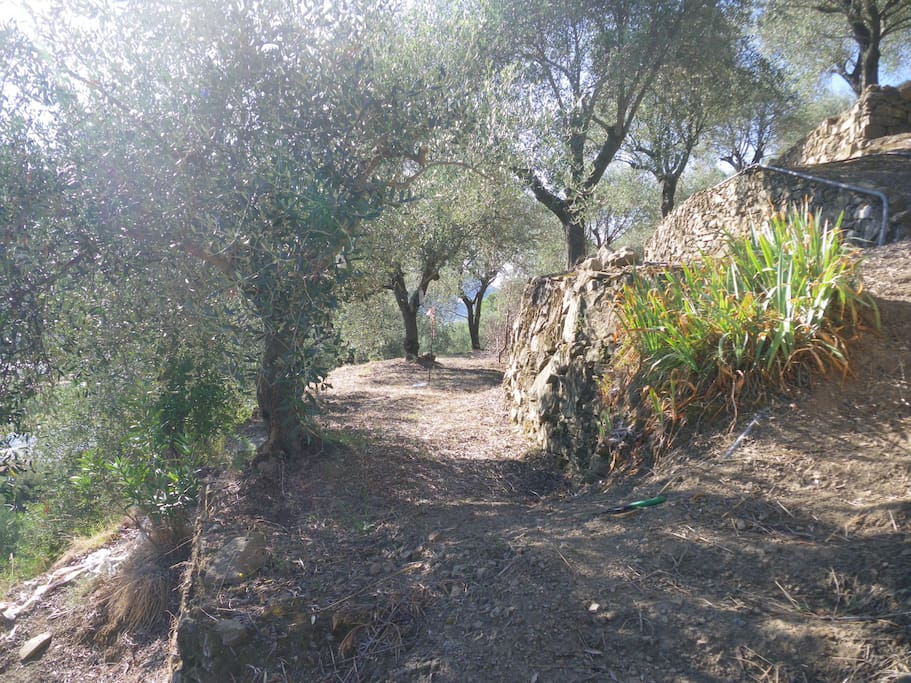Plenty of terraces to stroll around under a canopy of olives.