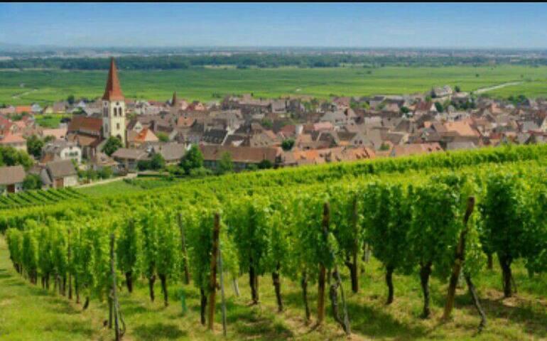 Koshesberg à proximité de la route des vins.