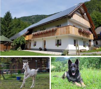 Anina domačija-cosy apartment in small village