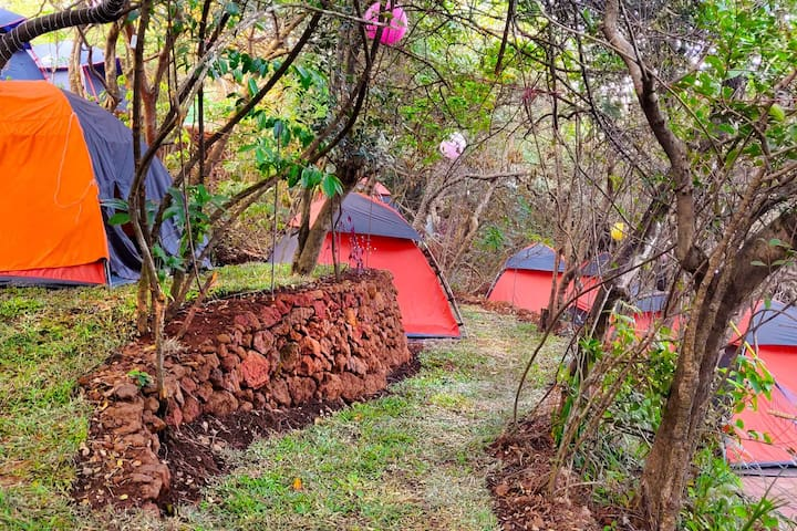 Spacious Tent for two in Mahabaleshwar Rainforest