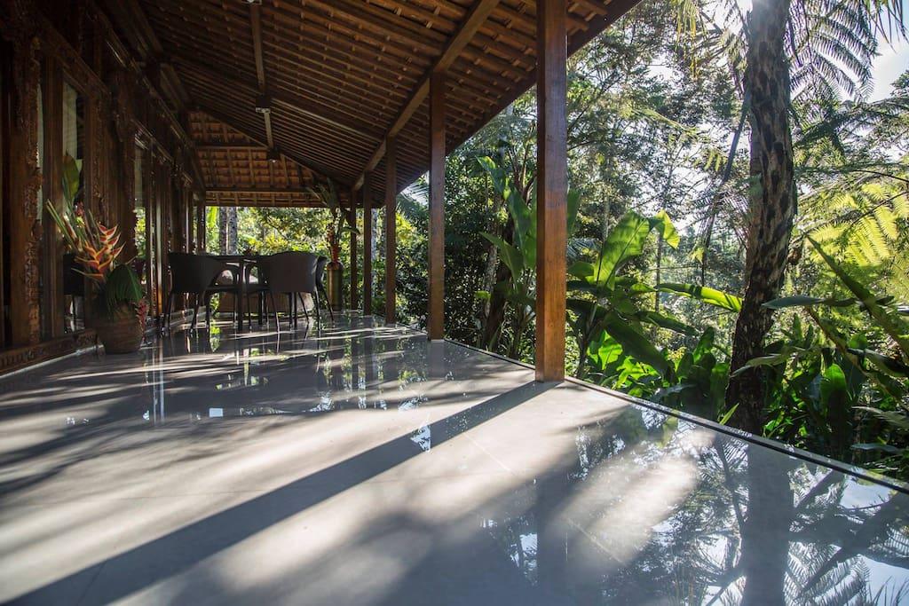 Your verandah in the rain forest