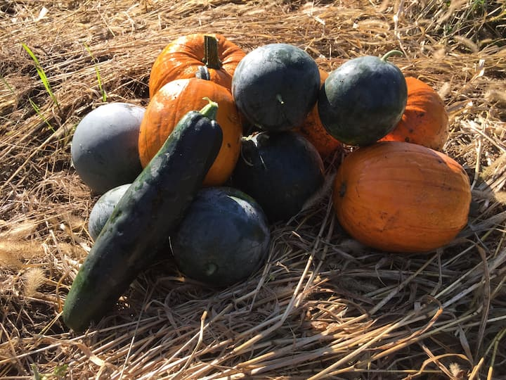 A sample of the fall harvest