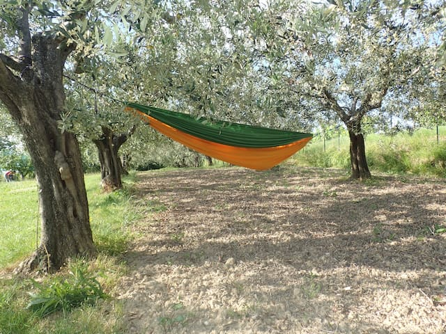 Silent place between olive threes - Malija - Dom