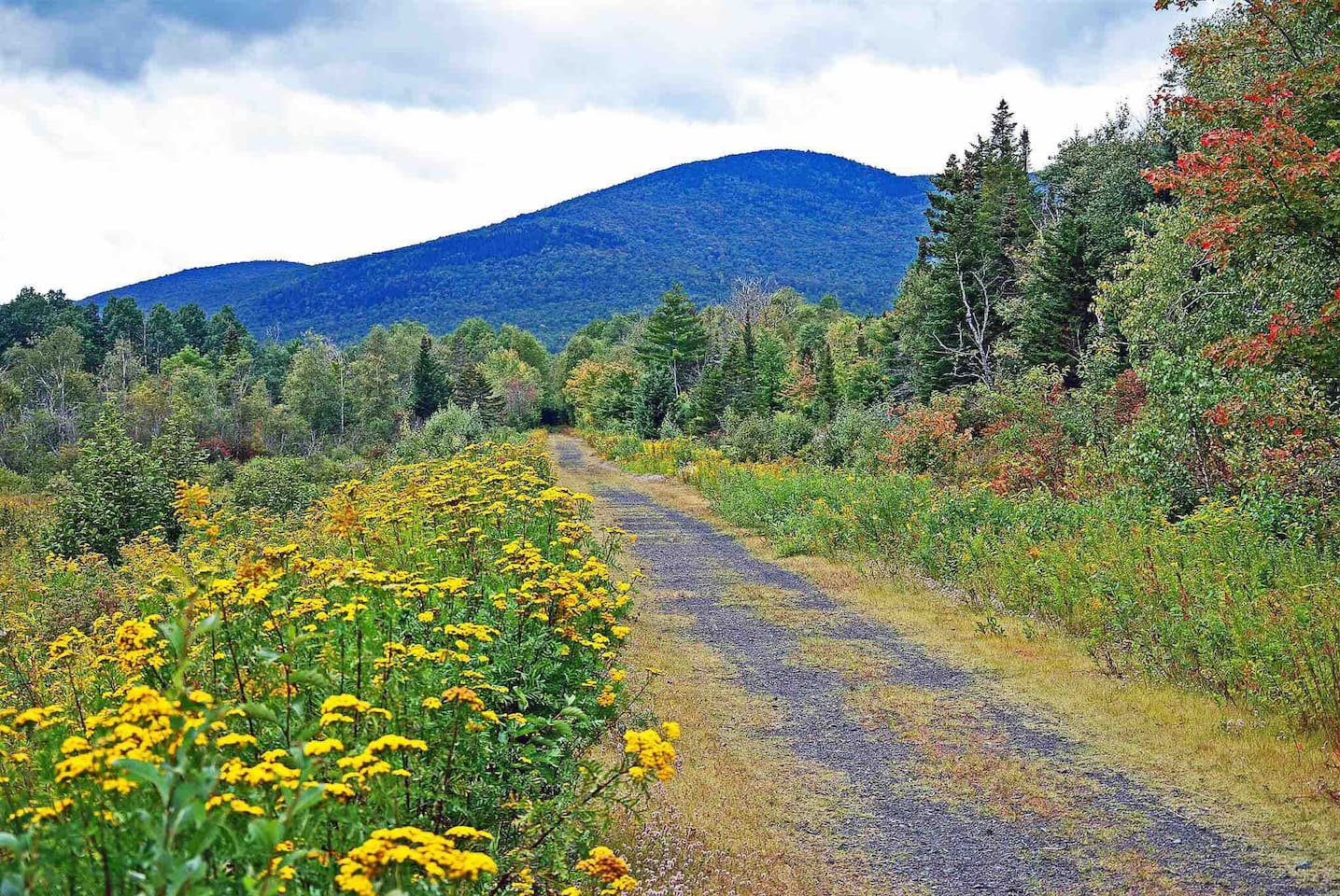 Early foliage sneak peek in September along Presidential Range Trail Rail.  Book and tour foliage with us and save.