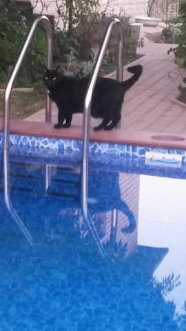 cat and cool pool