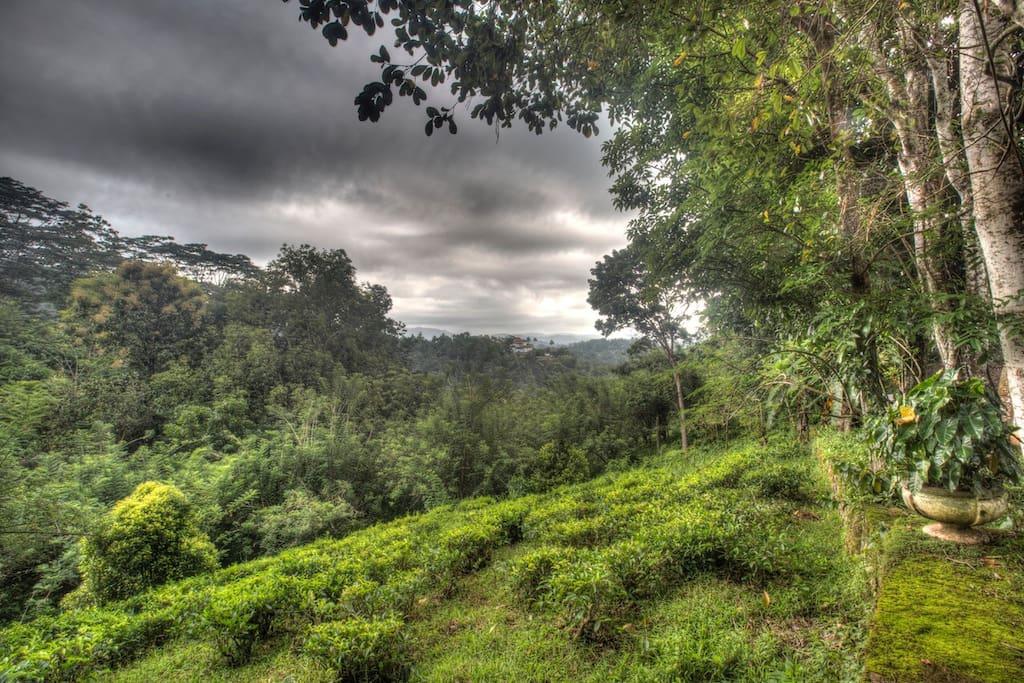 Unbelievable surrounding - tea estate