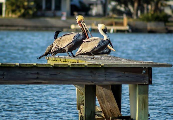 Crashboat Camp Bayside Apartment is waterfront - Galveston - Apartmen
