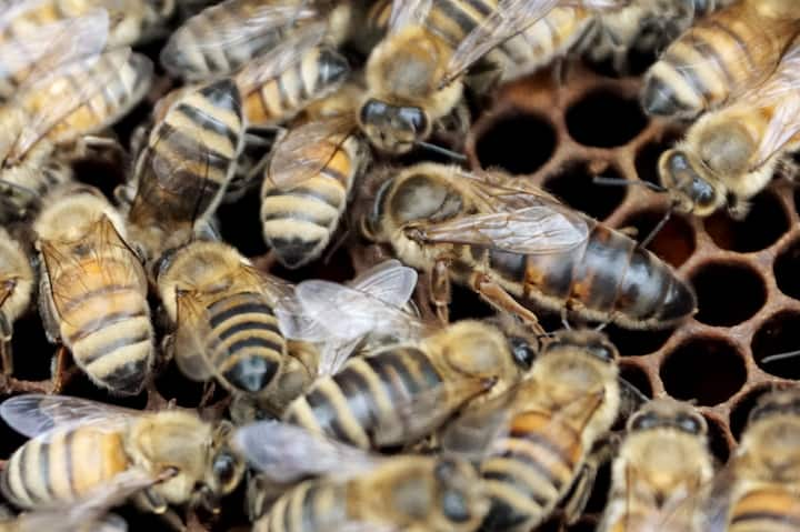Get a close look at the world of bees