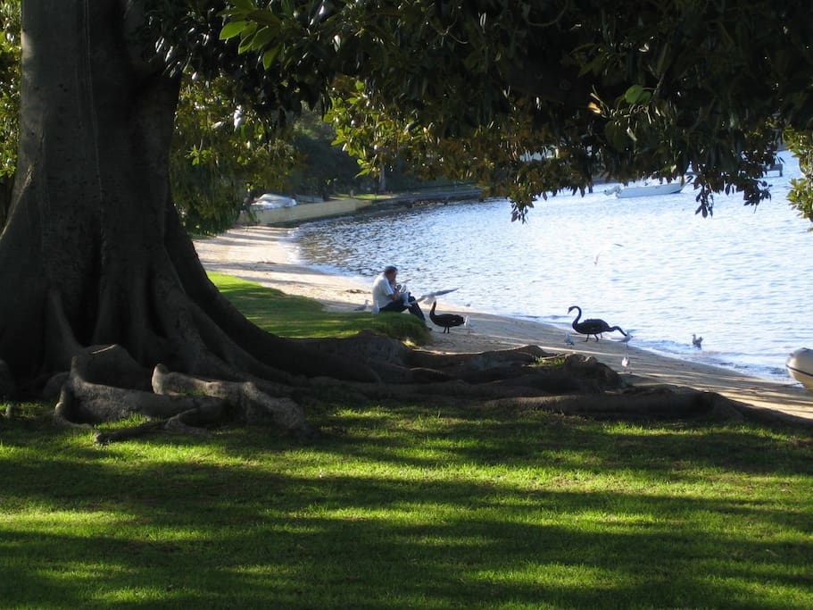 Walk along the Swan River and feed the black swans - only 12 minutes walk away through Peppermint Grove, one of Perth's most beautiful suburbs.