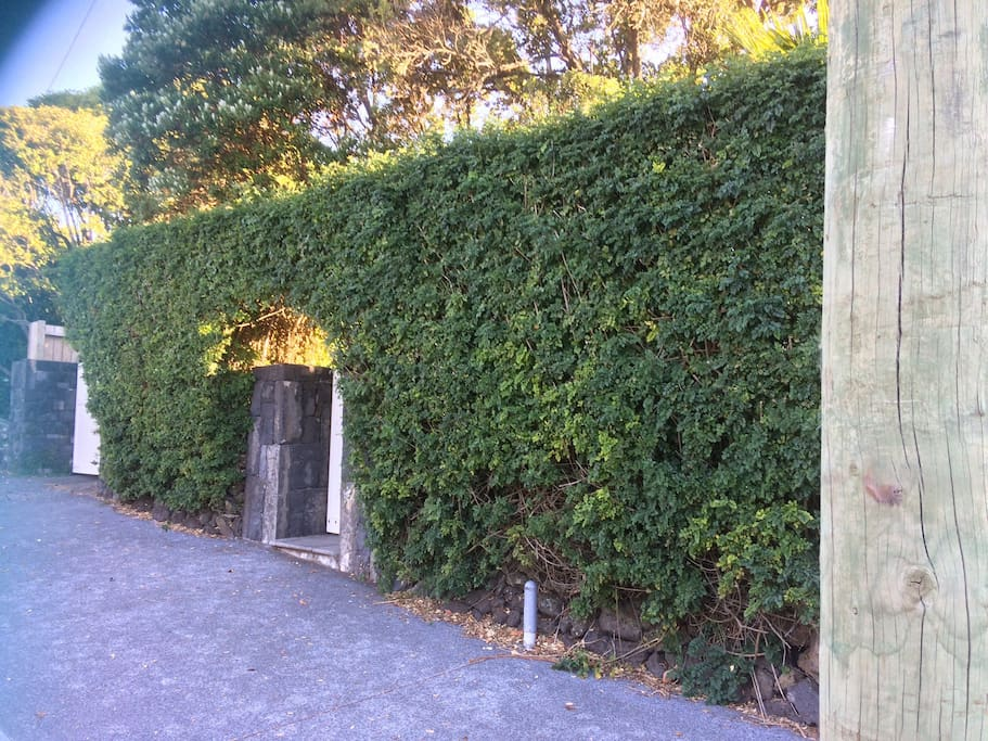 Located behind our tecoma hedge, giving wonderful privacy.
