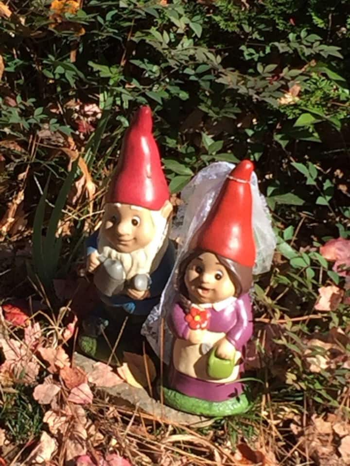 Gnomes live in the garden