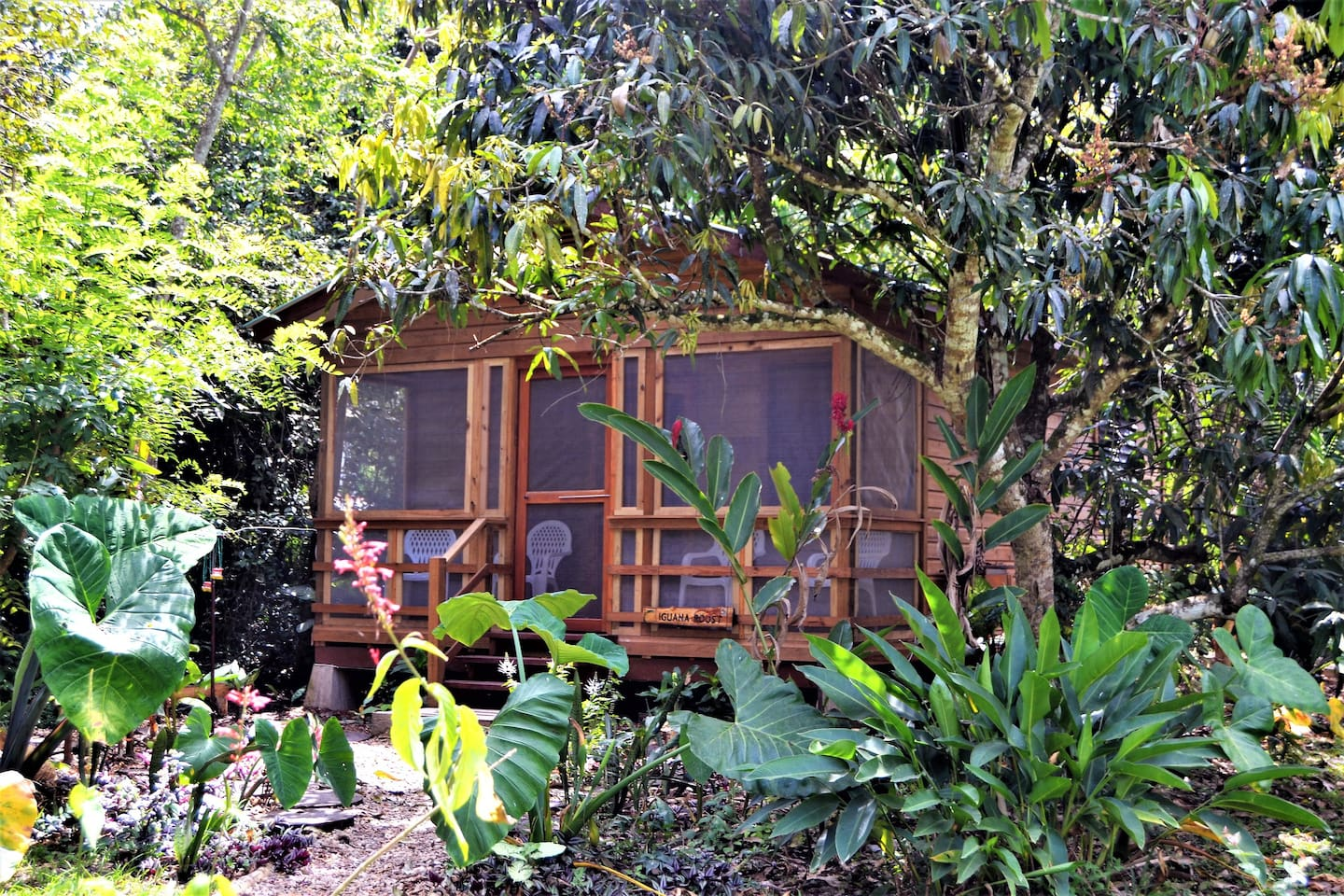 Self Catering Cabin set in sub tropical gardens, and  depending on the time of the year you can pick fresh mangoes off the tree right outside your accommodation !