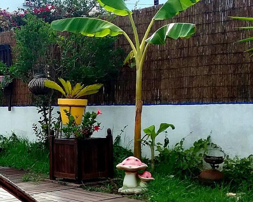 Bananeiras e plantas de jardim