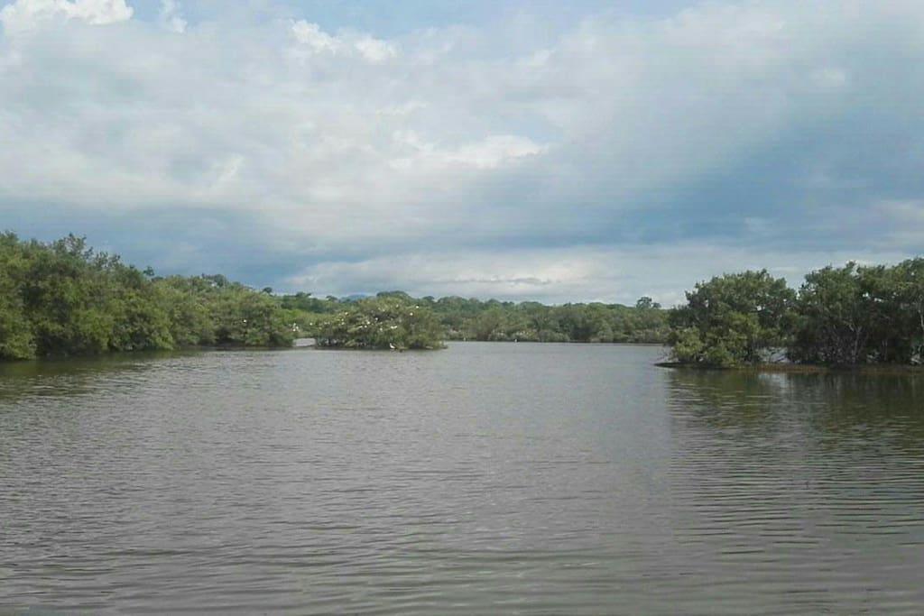Manglar cercano ala Quinta Catlleya ubicado en Bajamar