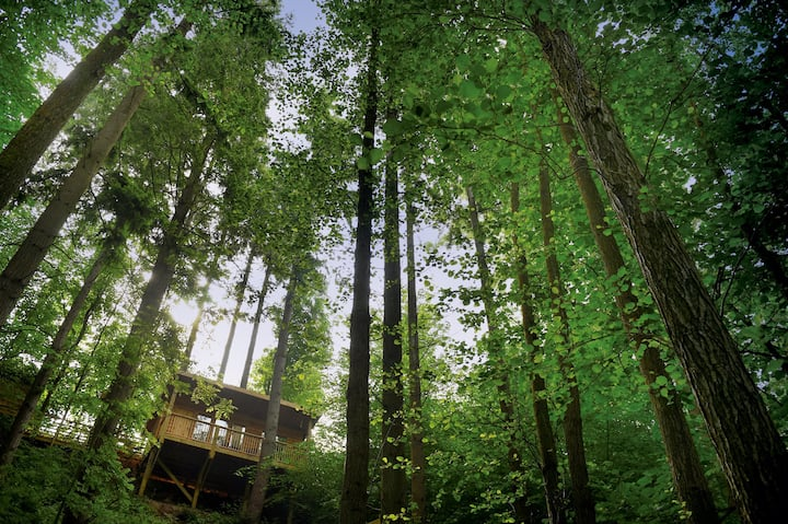 Treetop Cabin - Luxury Couples' Hideaway