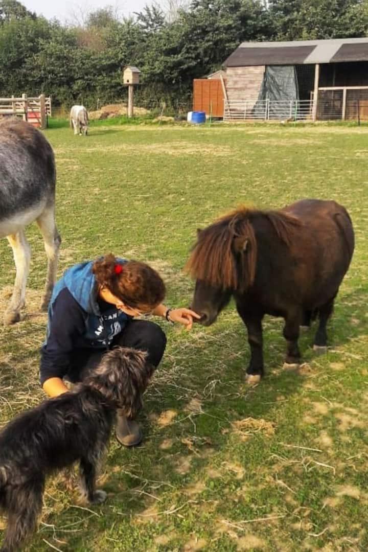 Little horse, big heart