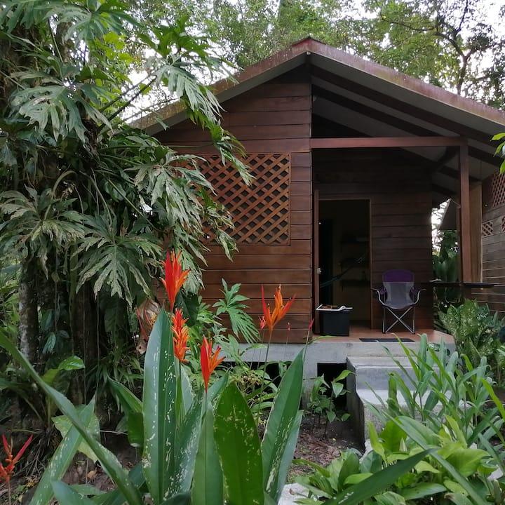 The Rainforest Cabina at Casa Cecropia