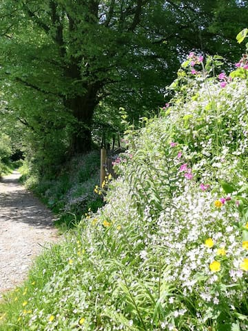 Spring flowers along the Bridle way leading to Saxon banks