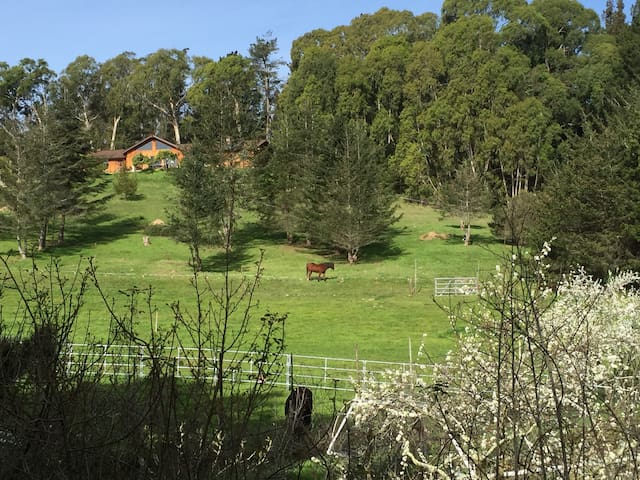 Dusty Trail Horse Ranch, Sunny & Spacious Bedroom - 沃森維爾(Watsonville) - 獨棟