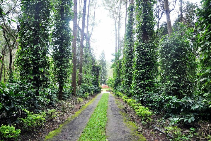 Berry Trails Homestay, Coorg