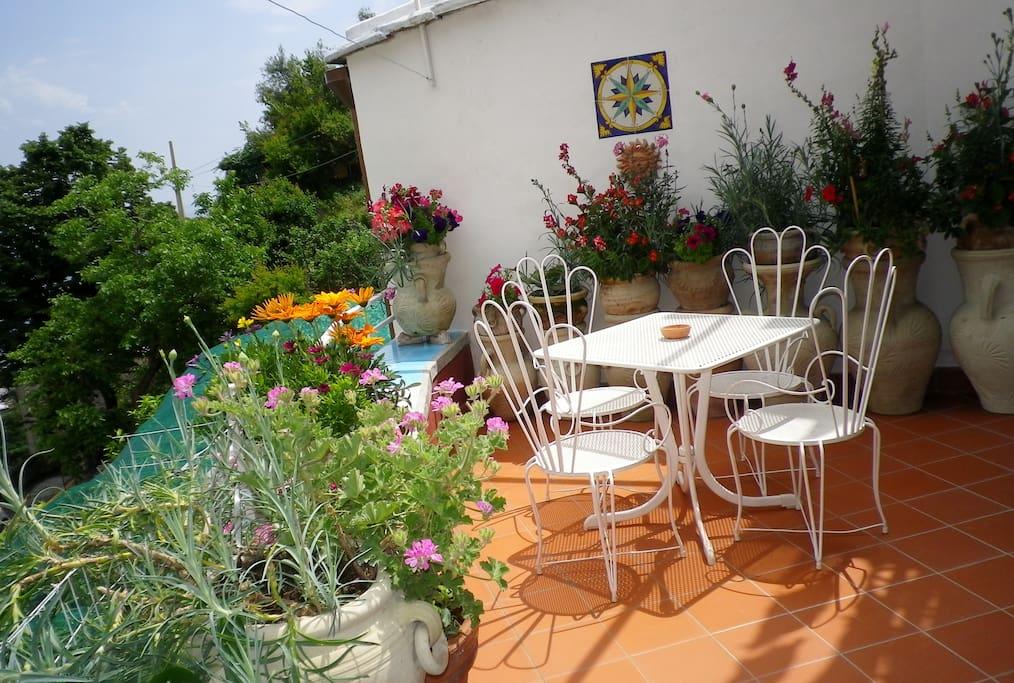 Flowers Filled Terrace