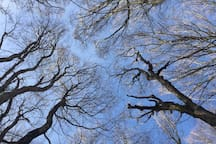 el dibujo de las ramas