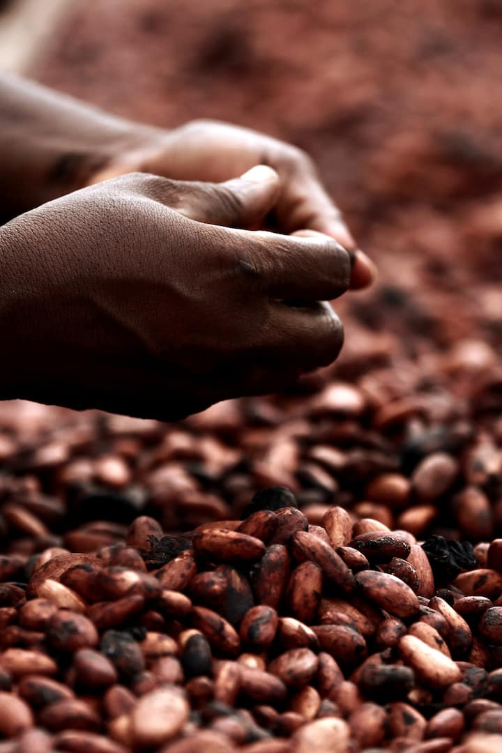 Cacao farmers wellbeing is essential