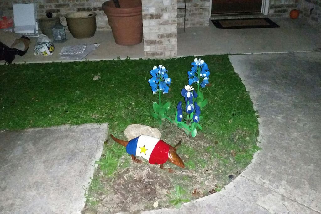 Texas blue bonnets and an armadillo welcome you.