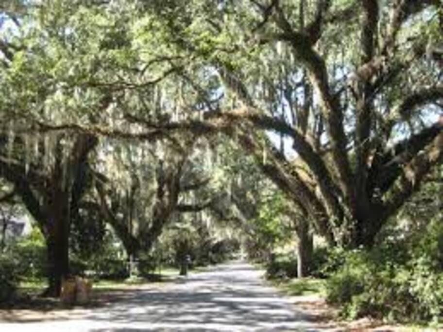 Oak draped walkways...
