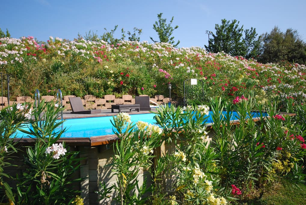 The pool is surronded by colorful flowers in the summer season