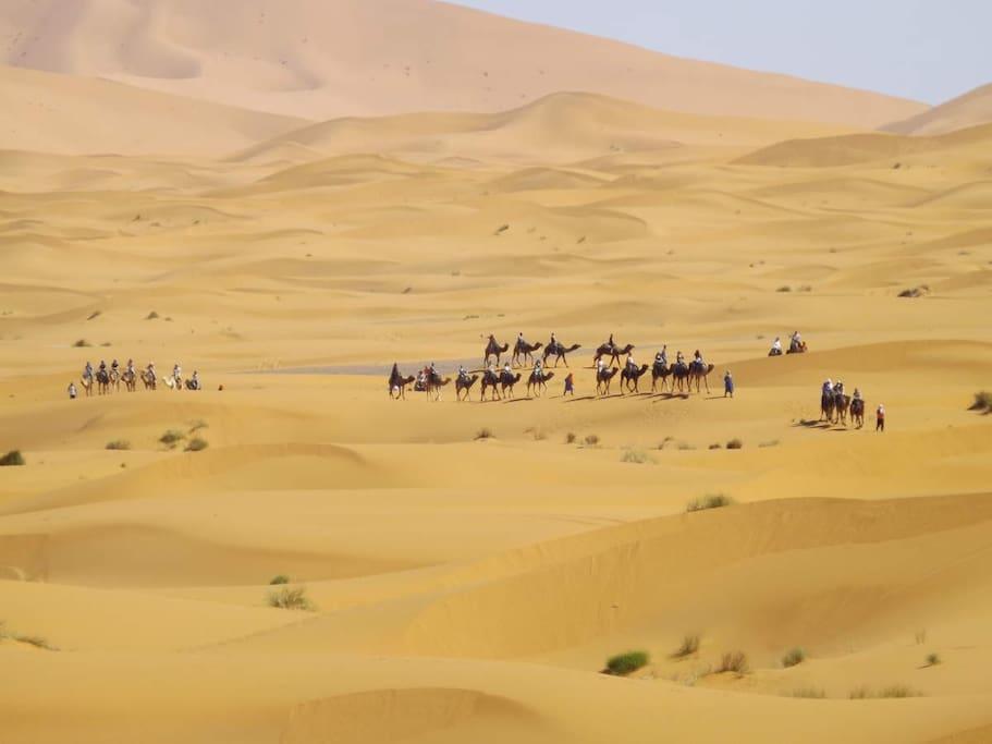 Camel tours around sahara