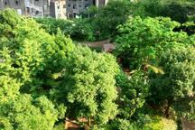 武汉理工大学对面 清新森林系舒适阔居 可做饭