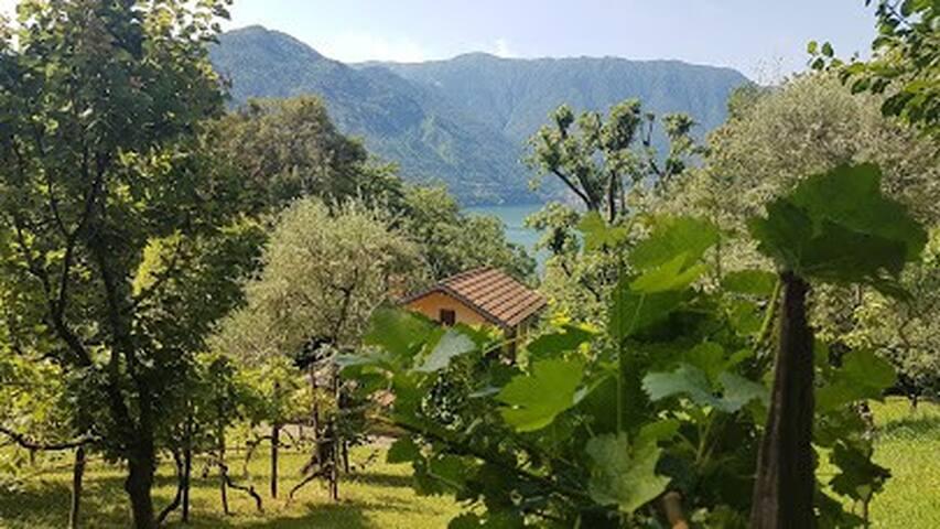 Casa Mario - Idyllico parco sopra il lago di Como