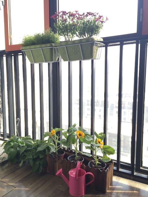阳台花草芬芳