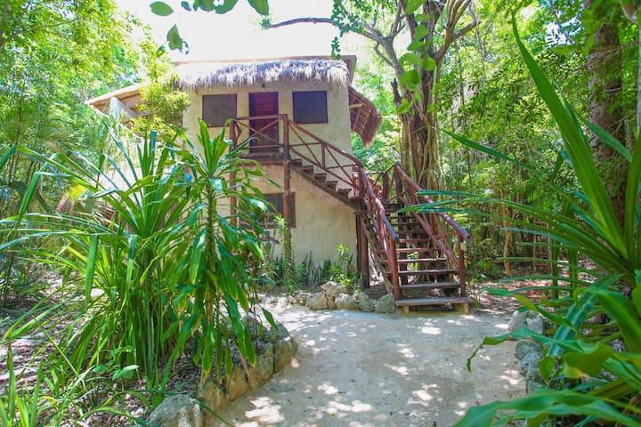 Comfortable Cabin in the Magic Jungle, Nicteha